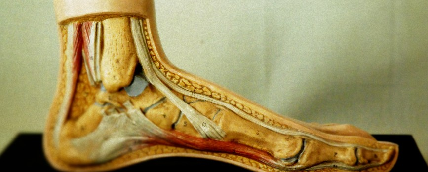 Calzados Ortopédicos Asensio